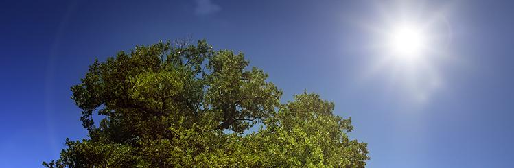 Sunshine and Tree