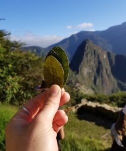 Hand holding cocoa leaves in front of Machu Picch