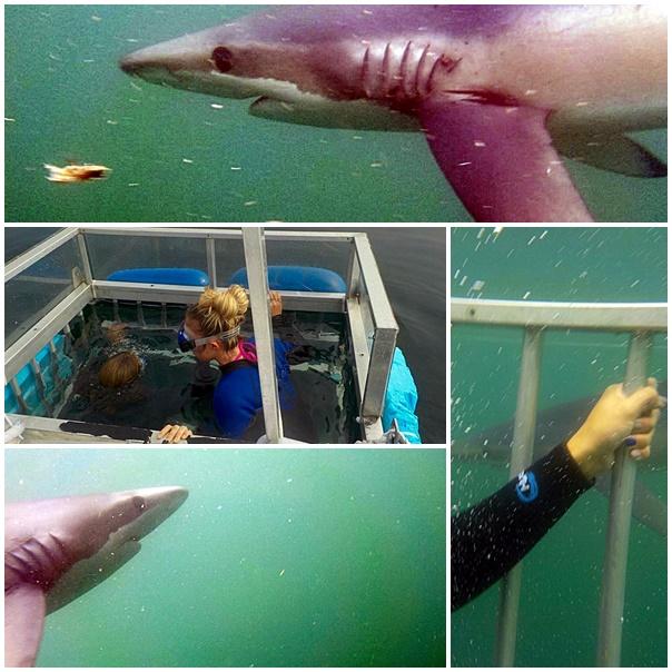 McKay Champion Sara Carnabucci swimming with sharks